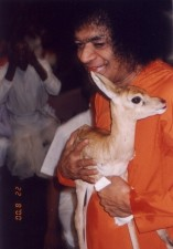 Baba_with_a_deer_cub
