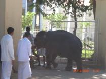 INDIA TRIP 07 100