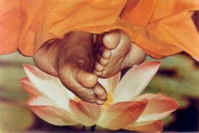 lotus feet flower